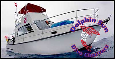 Dolphin Sun Dive Charters | Boynton Beach, FL | South Florida Scuba Diving